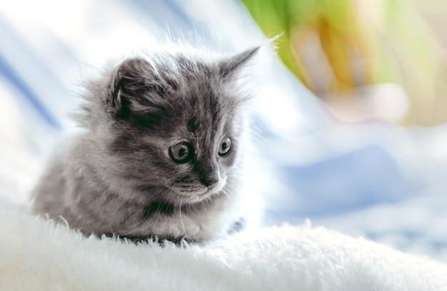 새끼 고양이는 홈 인테리어에서 휴식을 취합니다. 아름다운 회색 고양이의 초상화는 부드러운 파란색 격자 무늬 배경에서 휴식을 취합니다. 복사 공간에 누워 집 애완 동물입니다. 행복한 국내 동물 포유류 고양이.