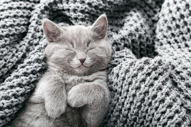 Котенок расслабляющий. портрет красивого серого котенка расслабиться на мягком сером связанном фоне. домашний питомец. счастливый кот домашнего животного. вид сверху с копией пространства.
