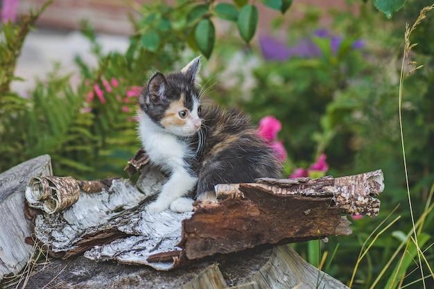 Котенок сидит в саду зеленой лужайке. котенок лежит на природе