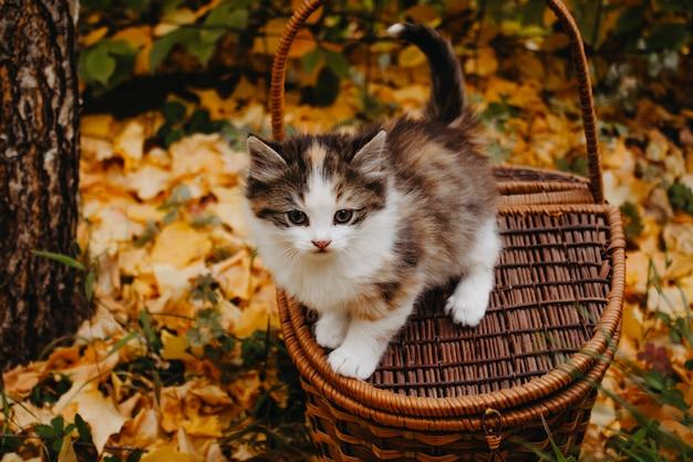 木製のバスケットに座っている子猫