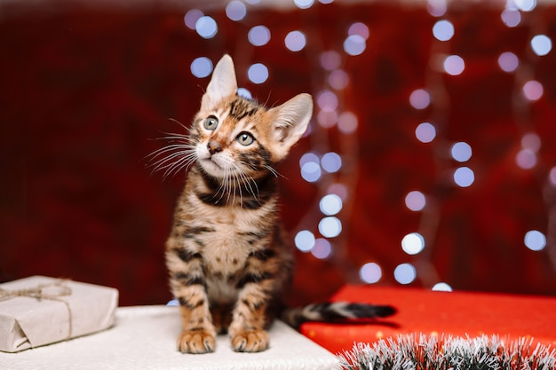 Kitten sitting on a gift box with bokeh wall