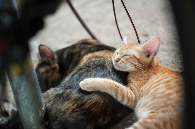 Kitten sleeps behind her mother