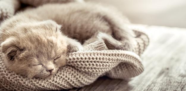 子猫はセーターで眠る