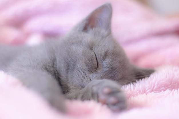 A kitten sleeps on a pink blanket.