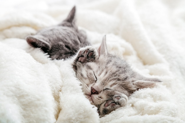 Kitten sleeps with its legs up. pads on legs of sleeping kitten covered with warm blanket on fluffy soft white blanket. family couple cats resting together. sweet dreams domestic pets.