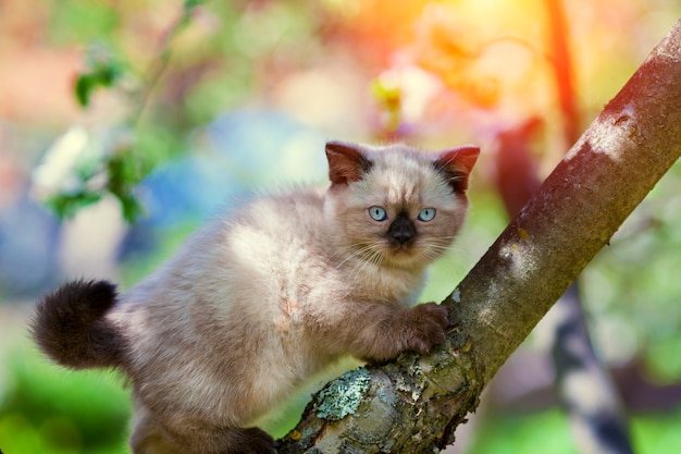 Котенок крадется по дереву