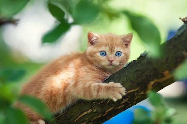 木に忍び寄る子猫