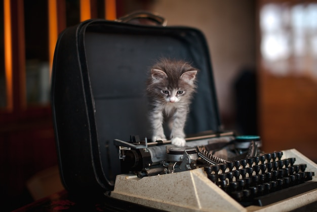 A kitten walking on an old typewriter
