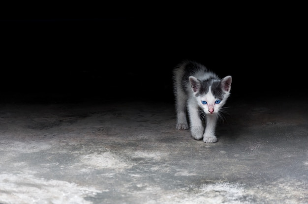 Котенок с красивыми голубыми глазами, анималистический портрет, игривый кот расслабляющий отдых