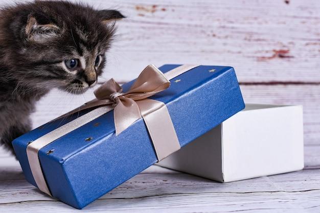 Котенок с подарочной коробкой