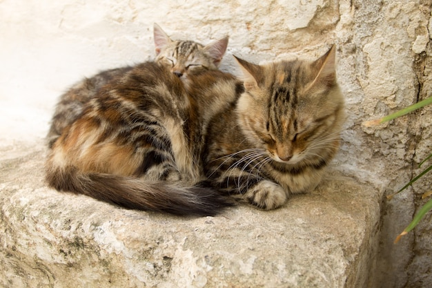 Kitten with mum sleeping on the ground. domestic cat view.
