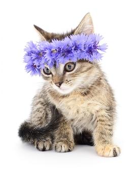 Kitten in a wreath