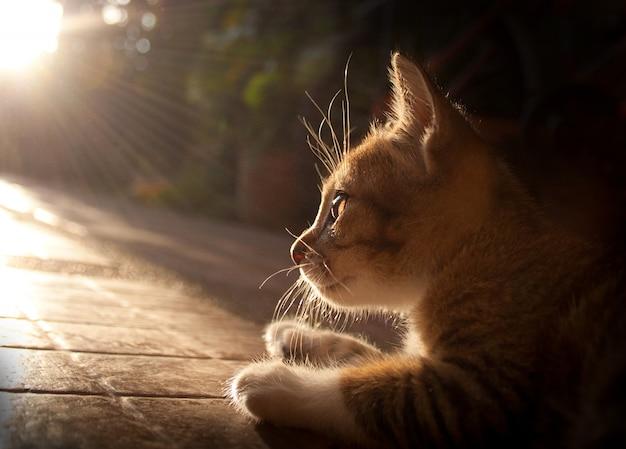 새끼 고양이와 빛나는 조명