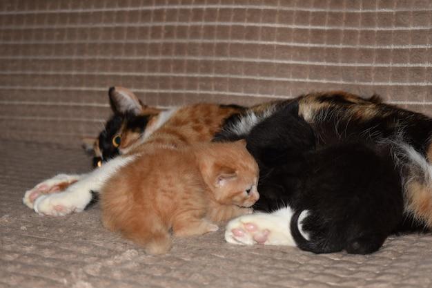 Котята едят молоко кошек
