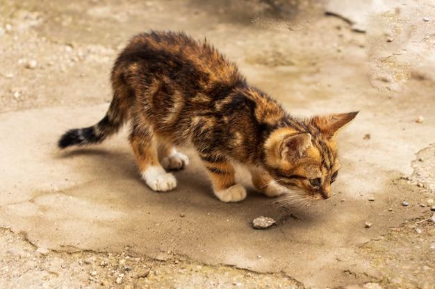 바닥에 있는 먹이그릇에서 먹는 고양이들