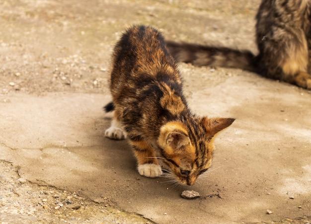 Котята едят из кормушки на полу