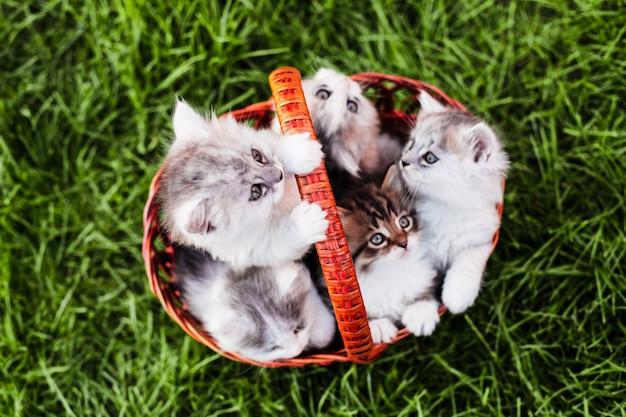 Котята в корзине на траве на открытом воздухе