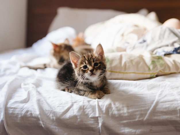 Kittens lie on a bed indoors in sunlight and a white pillow