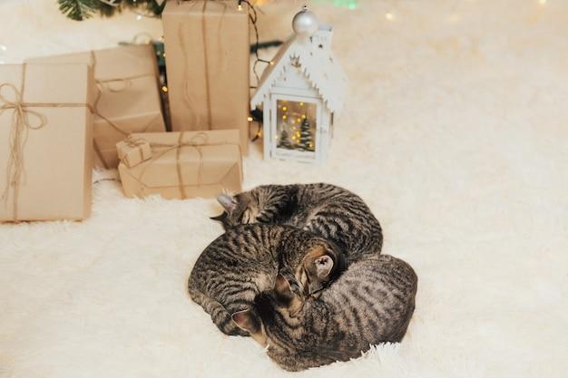子猫は、ギフトボックスの横にあるベージュの毛皮の格子縞の上にあります。