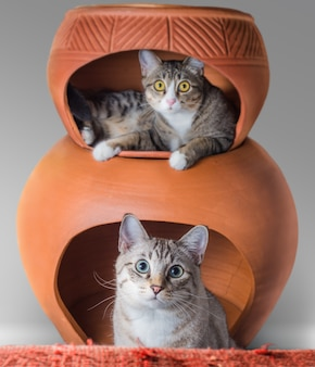 Kittens sitting in clay house pot looking at camera