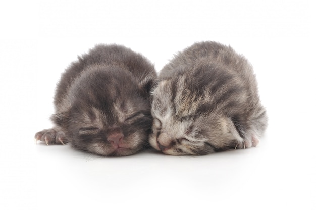 Kittens sleeping together