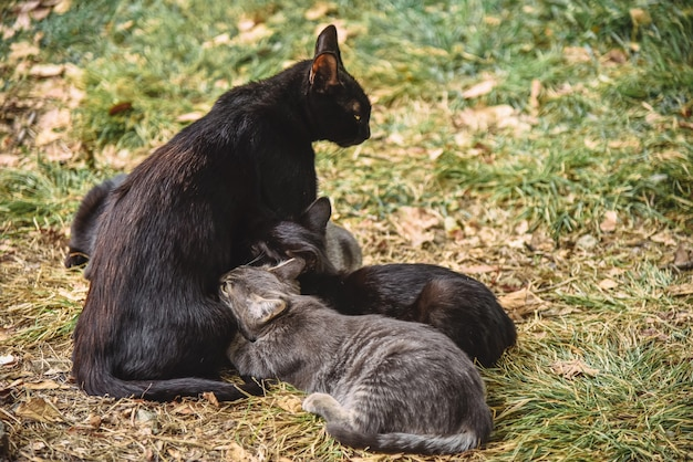 Kittens suck milk from the mother of the cat