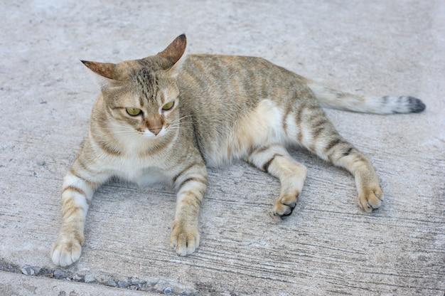 Kitty on floor