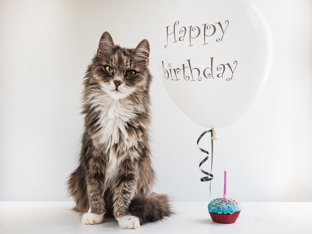 Kitty and helium balloon with birthday greetings
