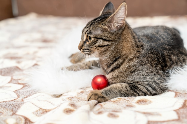 Kitty plays with a red ball lying on her favorite couch