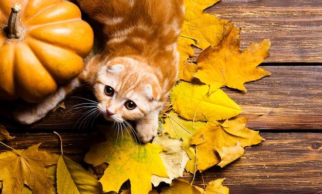Kitty and pumpkin