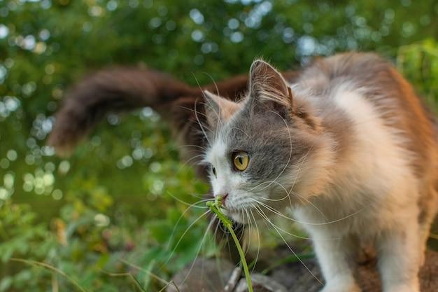 春の庭でキティが花を嗅ぐ