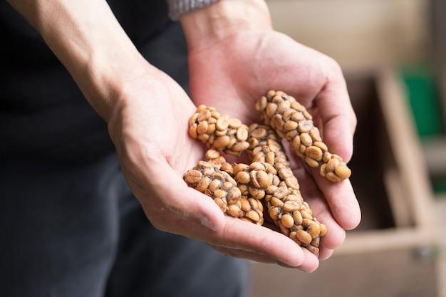 コピ・ルワク(kivi luwak)またはサイベット・コーヒー(civet coffee)、コーヒー豆