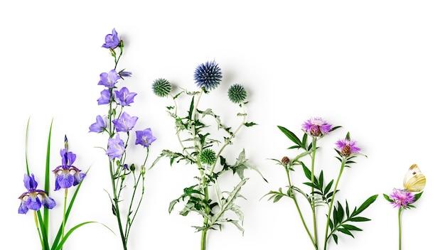 ヤグルマギク、アザミ、カンパニュラ、アイリスの花のコレクション。春と夏の庭の配置のピンクと青の花は、白い背景で隔離。上面図、フラットレイ。花のデザイン要素