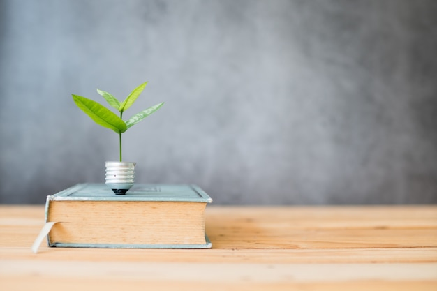 Knowledge growing up concept, small tree grow from lighting bulb and big book on table