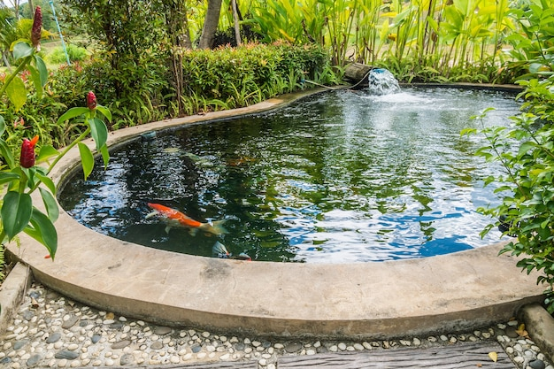 Koi fish in garden pond