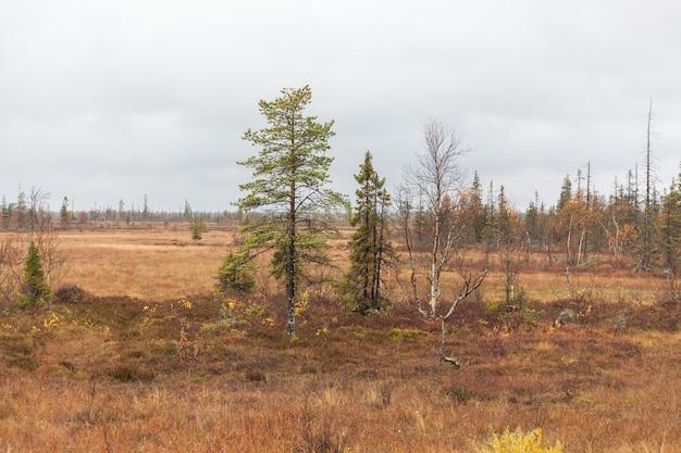 Kola peninsula, russia, tundra, colorful autumn landscape