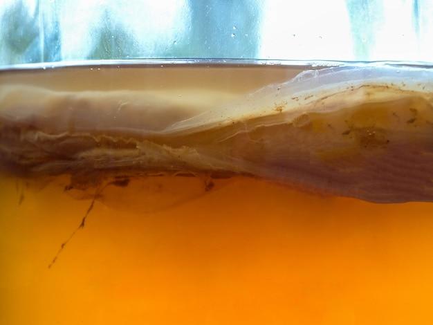 Комбуча грибок крупным планом текстуры. органический ферментированный чайный напиток.