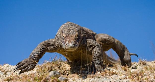 コモドドラゴンが地面にいます。
