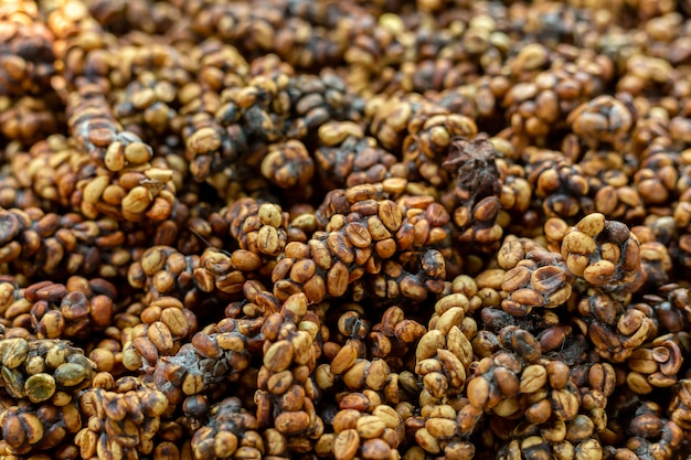 Kopi luwak or civet coffee, is one of the world's most expensive and low-production varieties of coffee, coffee beans excreted by the civet.