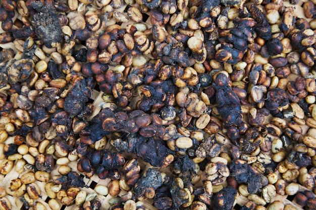 Kopi luwak은 세계에서 가장 비싼 커피 중 하나입니다