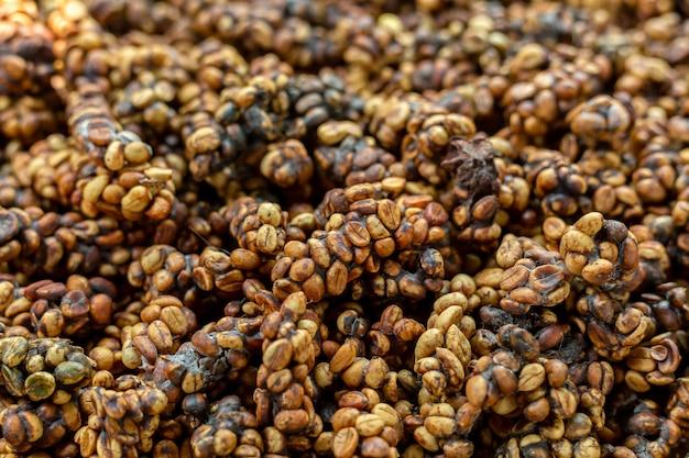 Kopi luwak 또는 사향 커피는 세계에서 가장 비싸고 생산량이 적은 커피 중 하나입니다. 사발로 배출되는 원두 커피.