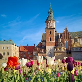 クラクフ、ヴァヴェル城の前のチューリップ、ポーランドの春
