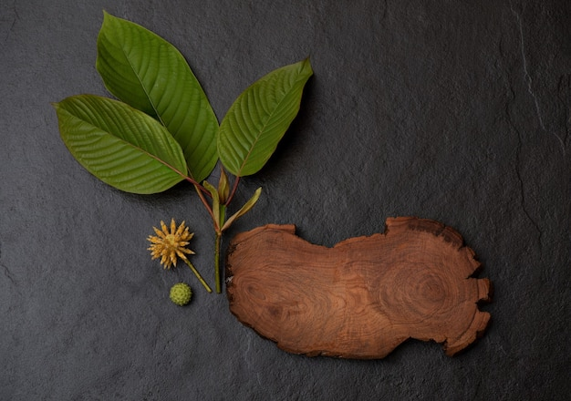 Kratom or mitragyna speciosa branch green leaves on black ceramic background.top view,flat lay.
