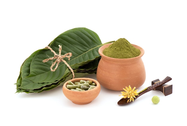 Kratom or mitragyna speciosa green leaves, powder and capsule isolated on white background.