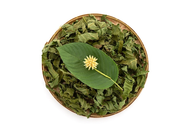 Kratom or mitragyna speciosa isolated on white background with clipping path,top view,flat lay.