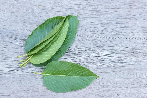 Kratom (mitragyna speciosa) mitragynine