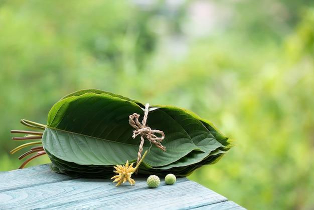Kratom or mitragyna speciosa on natural background.