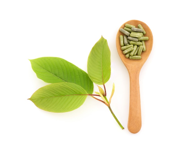 Kratom or mitragyna speciosa and powder in the capsules isolated on white background.top view,flat lay.