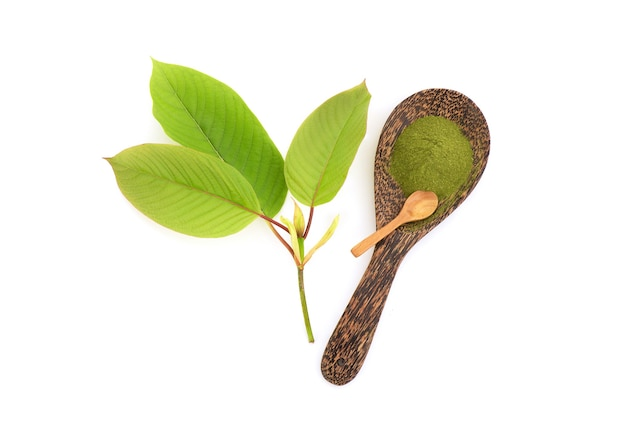 Kratom or mitragyna speciosa and powder isolated on white background.top view,flat lay.