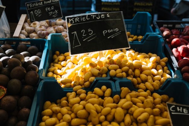青い木箱の中で新鮮に収穫されたオランダ種子ジャガイモ(krieltjes)